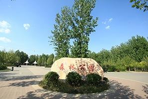 文安县森林公园绿化养护项目